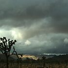 Joshua Trees on a Stormy Day by Maurine Huang