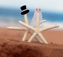 Starfish Wedding by Anita Waters