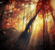gravity of light by ildiko neer