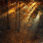 shining forest by ildiko neer