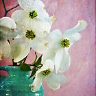 Dogwood by Sarah Thompson-Akers