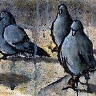 Pigeons #4 by RandyC