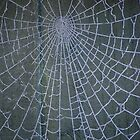 Frozen Spiders Web by Toots2