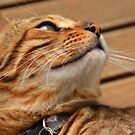Bamboo - the lovely Bengal Cat by Gilberte
