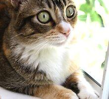 Mallory - gazing outside by Kimberly Palmer