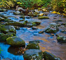 Cool Colors, Smoky Mountain Creek by photosbyflood