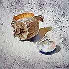 Sea Shell on a Rock by Irina Sztukowski