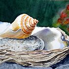 Sea Shell on the Rock by Irina Sztukowski