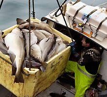 The big catch by Þórdis B.