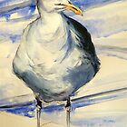 San Francisco seagull: pen and wash by Elizabeth Moore Golding