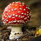 Autumn Jewel by Geoff Carpenter
