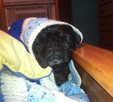 Black Pug Oliver on the Bed by kalitarios