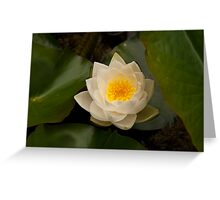 Perfectly White Water Lily Greeting Card
