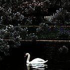 Swan by Jasna