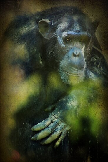 Deep Thoughts by Laurie Search