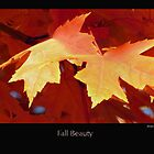 """Fall Beauty"" was taken with a Canon Power Shot 610 - 5.0 Mega Pixels.  Minnesota is so beautiful this time of the year by Moninne Hardie"