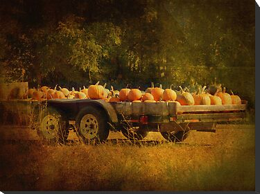 Pumpkin Harvest by Lucinda Walter