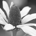 Giant Cone Flower - Caddo Lake - Texas by tiptoncreative