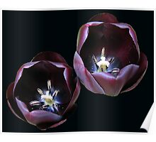 Dark and Mysterious - Burgandy Tulips Poster