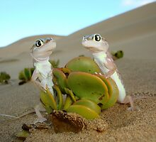 Spade-footed Geckoes - Namibia by Austin Stevens