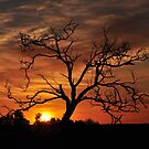 Meditation Tree in Flaming Sunrise by Coralie Plozza