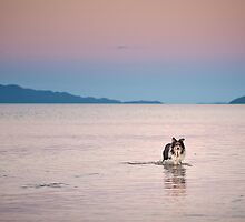 The Joy of a Rescue Dog by PhotoByTrace