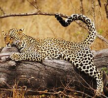 Wild Yoga! by Bassy