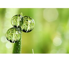 A Lawn in a Blade of Grass Photographic Print