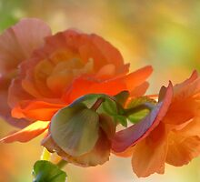 A Beguiling Begonia by AngieDavies