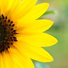 Sunflower by tiptoncreative