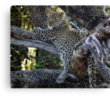 Mom Its Dinner Time Canvas Print