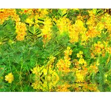 Flowers in the rain Photographic Print