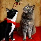 Jasper &amp; Chloe under the mistletoe by Lynn Starner