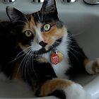 A cat in the sink by GRoyer