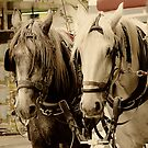 Horses Two by Maree Cardinale