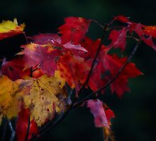 Falling Leaves by vigor