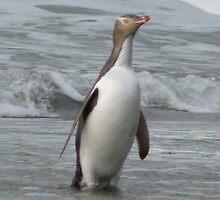 Penguin iPhone case by Neil Crittenden
