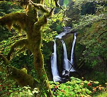 Triple Falls II by Tula Top