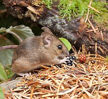 Woodmouse and Blackberries by kernuak