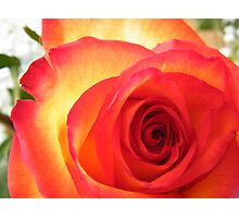 Red and Yellow Rose Photographic Print