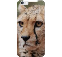 Cheetah Face iphone cover iPhone Case/Skin