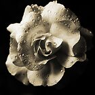 Rain Drops On A Rose -Sepia- by Evita