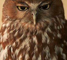 Not happy Jan! Barking Owl with attitude by Haggiswonderdog