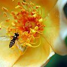 Rose Garden by Robin Lee