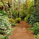 Secret Path by Robin Lee