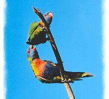parrots by STHogan