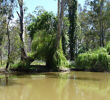 On the Murray: Barmah, Australia by Sally Kate Yeoman