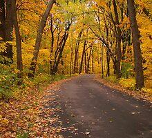 An Autumn Drive by Rosanne Jordan