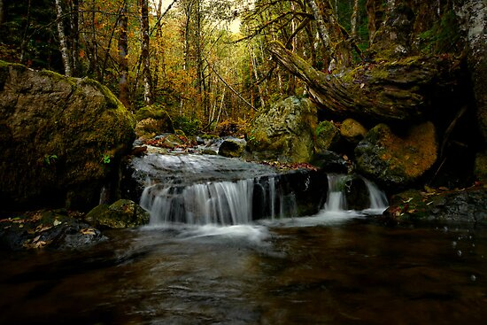A Thought For You by Charles & Patricia   Harkins ~ Picture Oregon