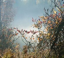 Mist In The Brush At Heber Down by Gary Chapple
